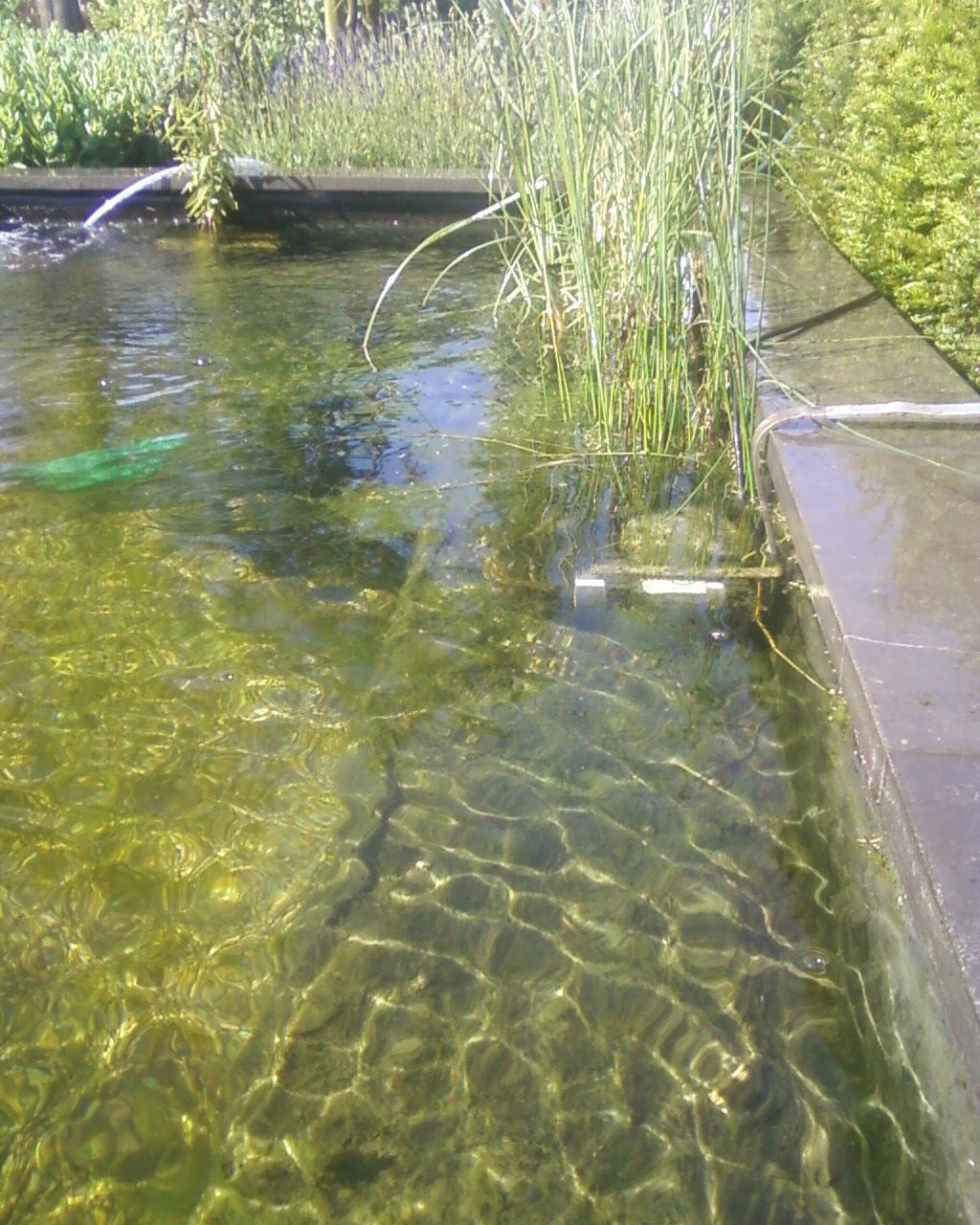 In deze bio-vijver ziet u de gemonteerde Aquasonic zijn werk doen.